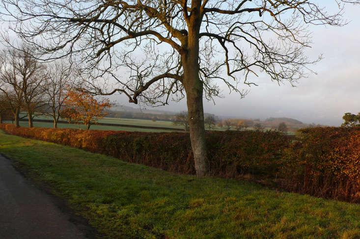 Hawthorn hedge, Northamptonshire