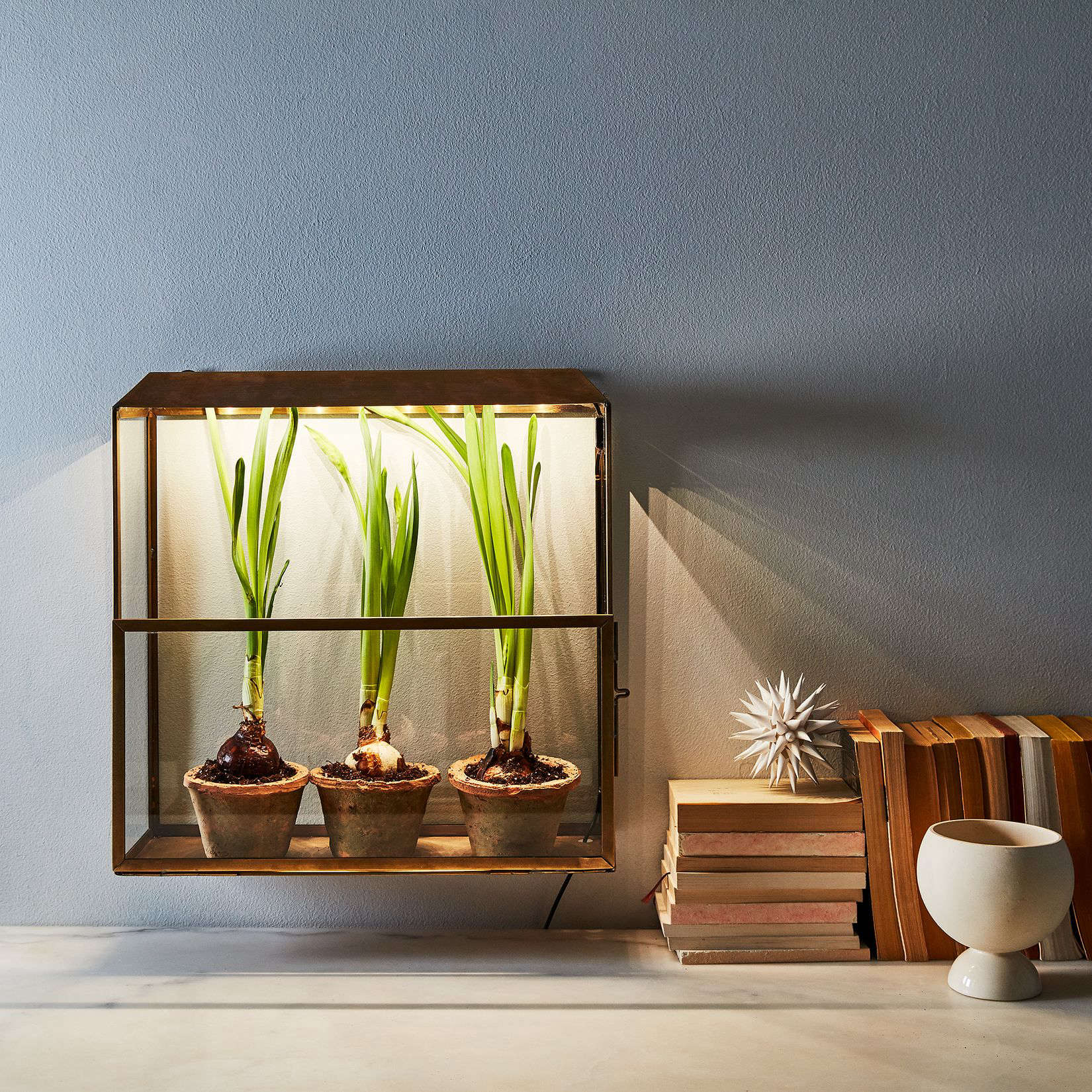 indoor-greenhouse-food52-modern-sprout