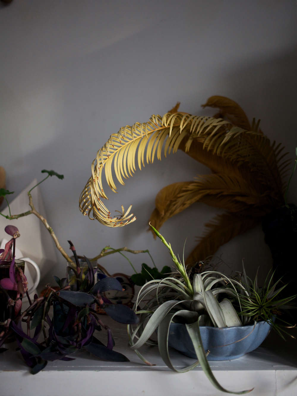 The dried sago palm fronds were a gift from her boyfriend; they&#8