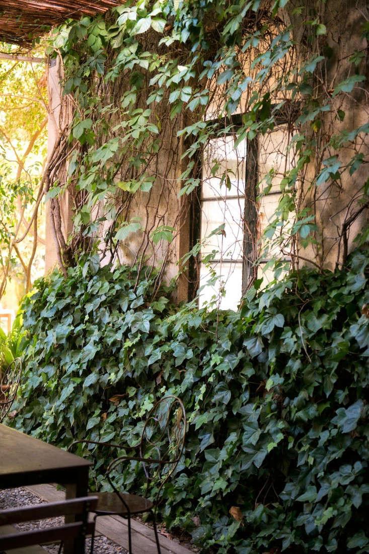 ivy-wall-barcelona-palo-alto-pancho-tolchinsky