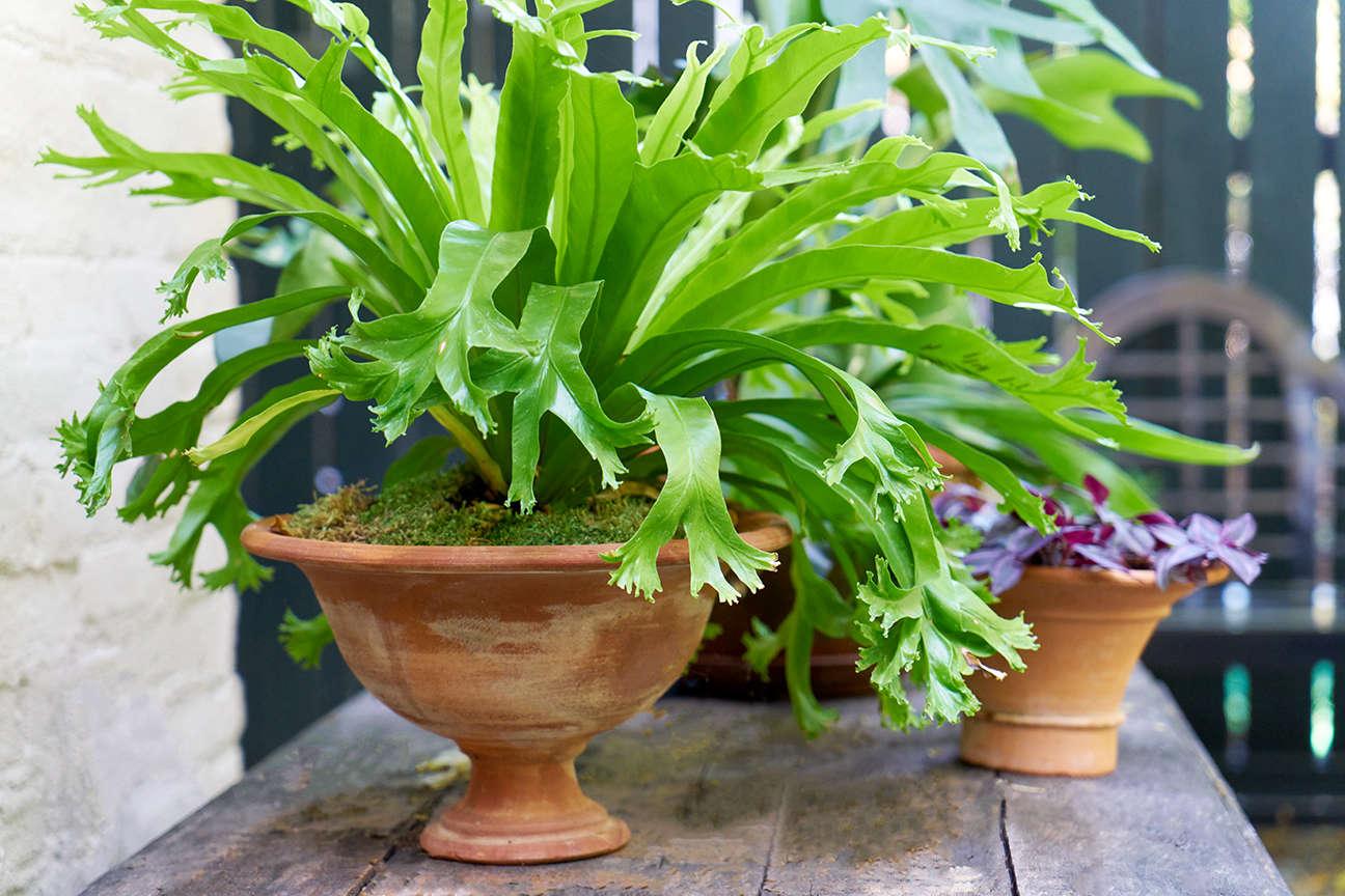 jen-catto-potted-plants-back-garden-terra-cotta-douglas-lyle-thompson