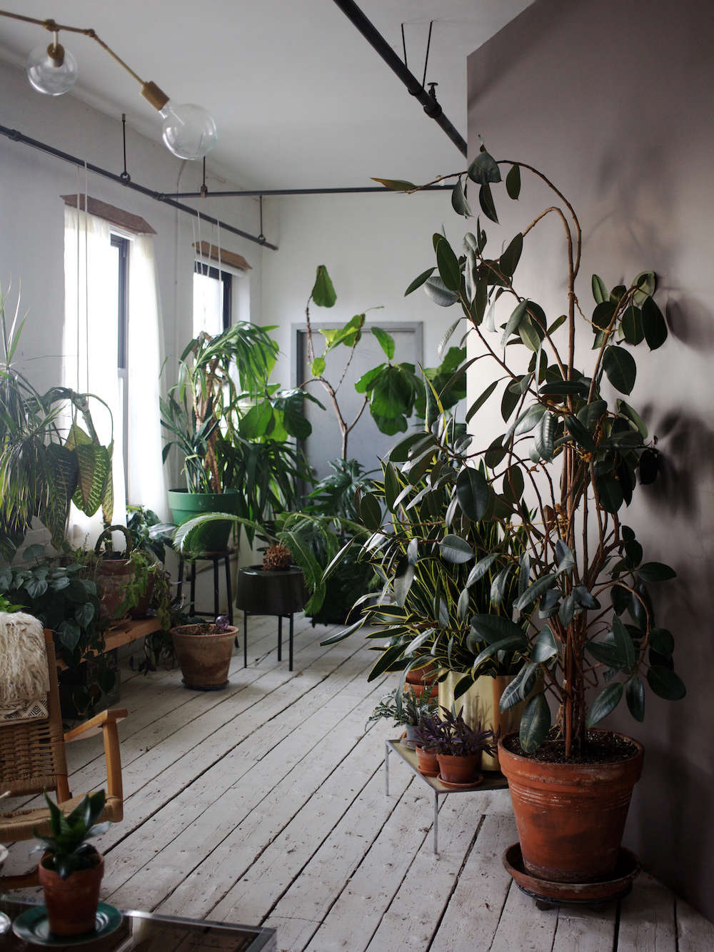 The apartment was painted white when she arrived, and Simon-Alexander added a gray-purple accent wall as the backdrop for her indoor jungle. At far right a rubber tree was &#8