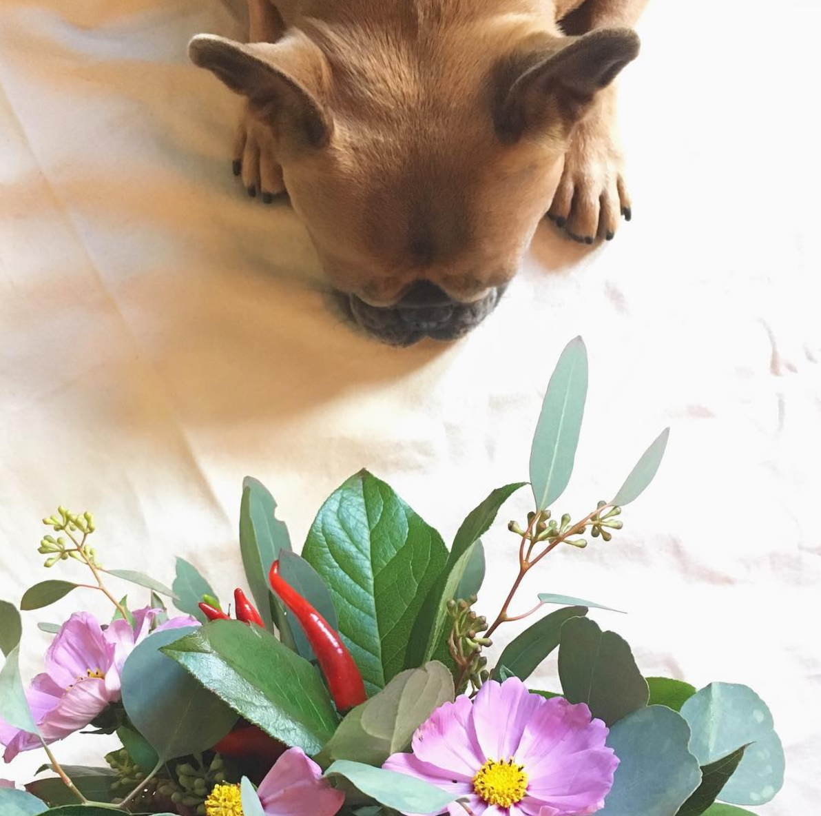 Petal by Pedal Dog with Bouquet