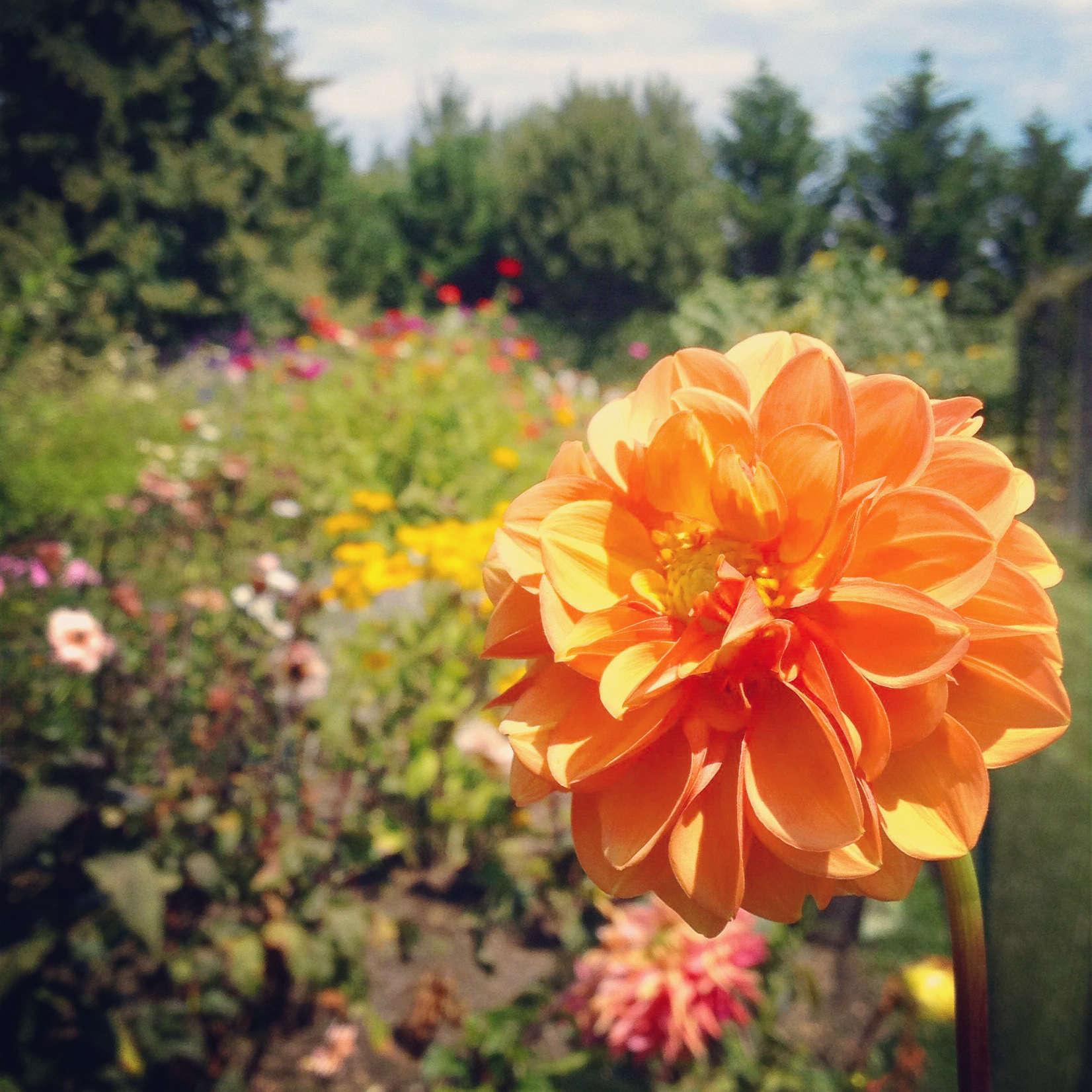 Petal by Pedal Flowers Growing in Field
