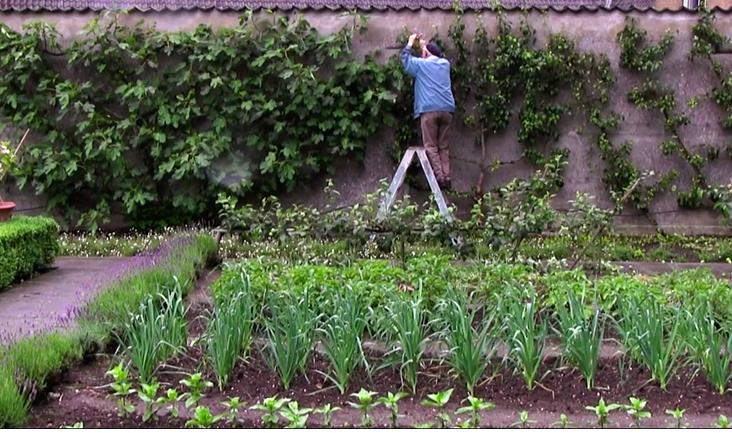 portrait-of-a-garden-film-prune-espalier