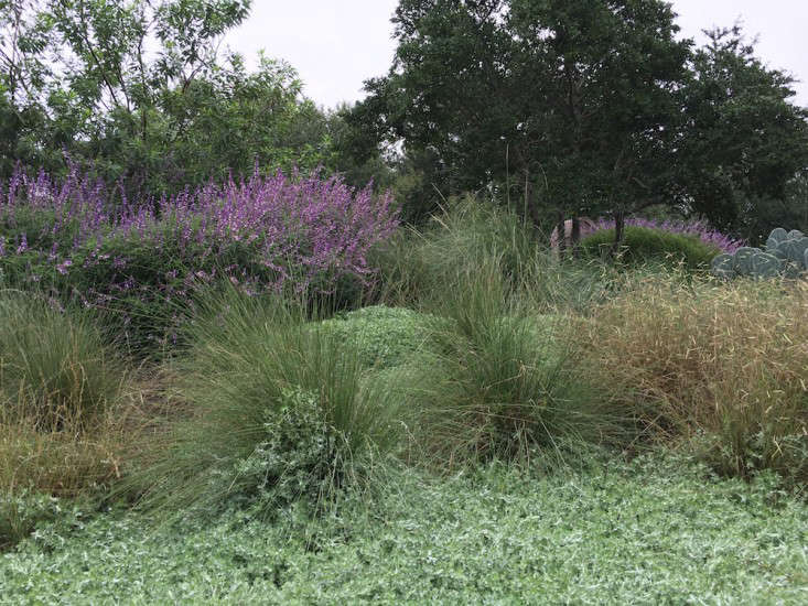 Lindheimer's muhly looks at home in this landscape by Texas Landscape Architect Tait Moring