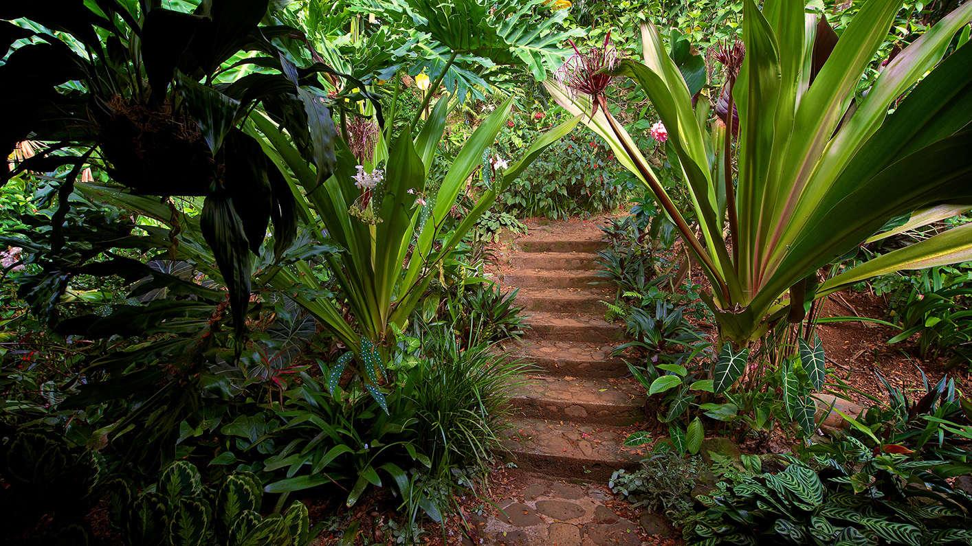 w-s-merwin-what-is-a-garden-book-stairway