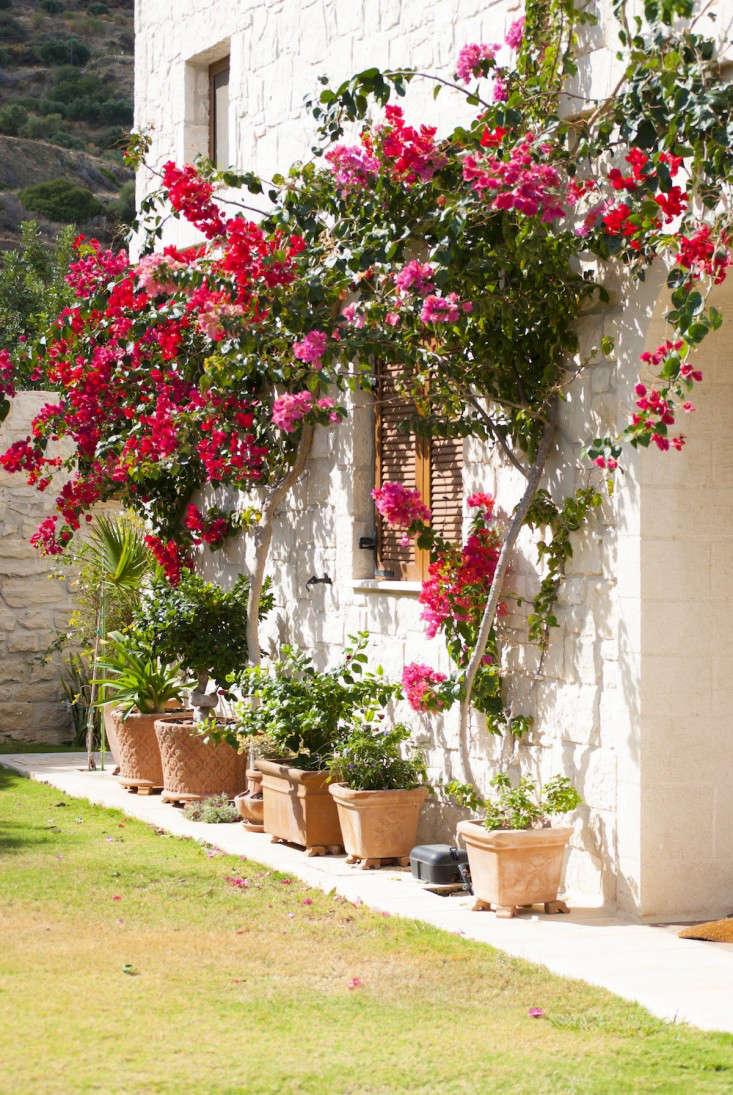 greek-garden-crete-eleni-psyllaki-4-gardenista