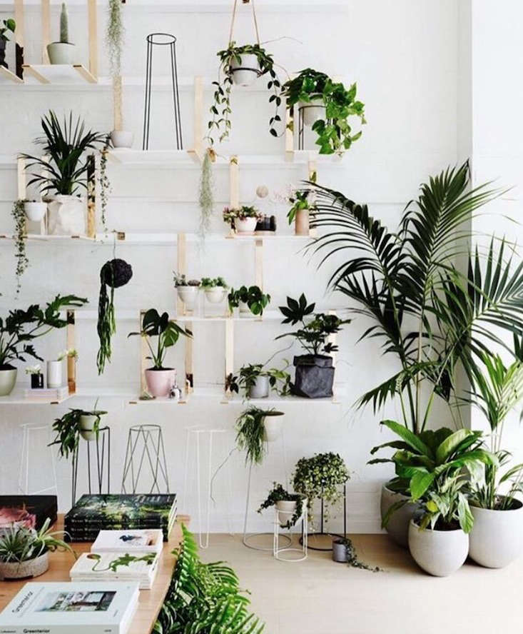 ivy_muse_gardenista_current_obsessions