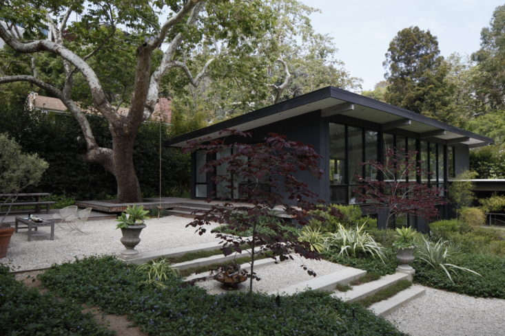 Photograph by Art Gray. For more, see Landscape Architect Visit: A Majestic Sycamore in Santa Monica.