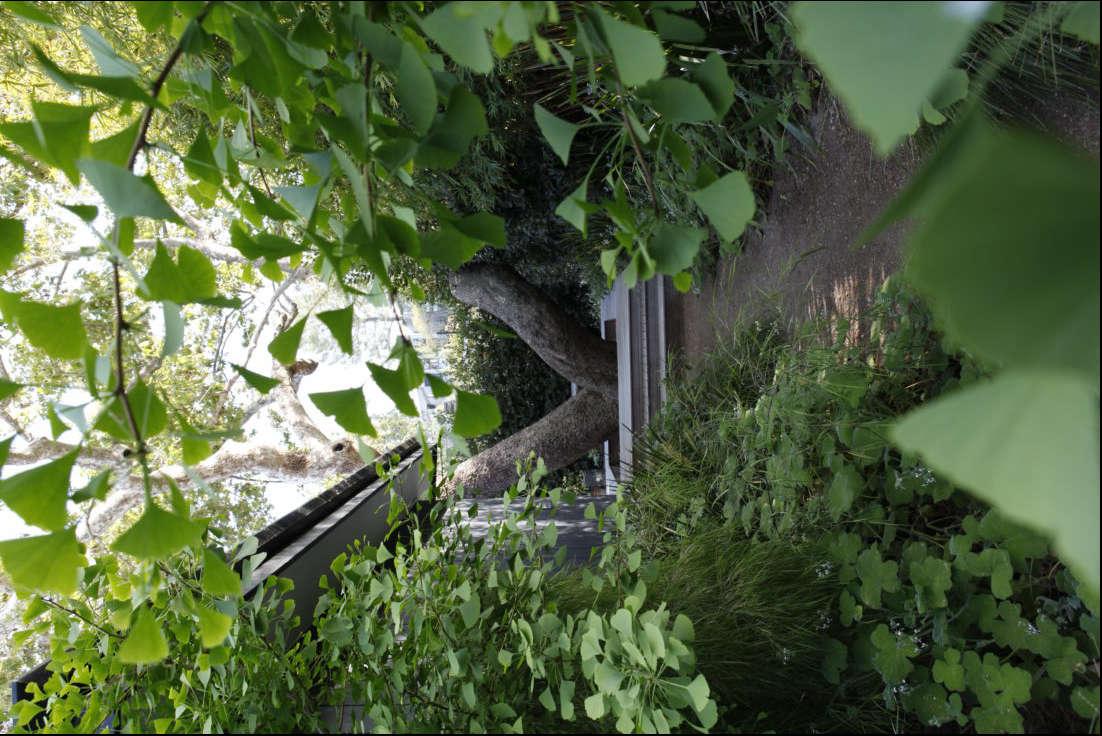 Ginkgo leaves frame the walkway.