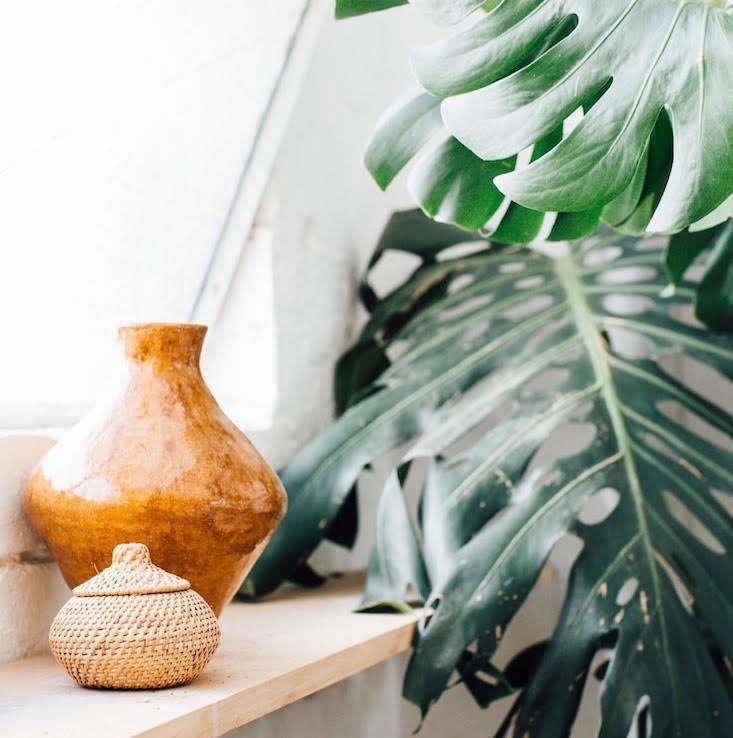 wander_store_plants_gardenista