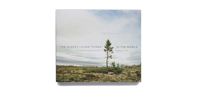 best-gift-books-2016-the-oldest-living-things-in-the-world