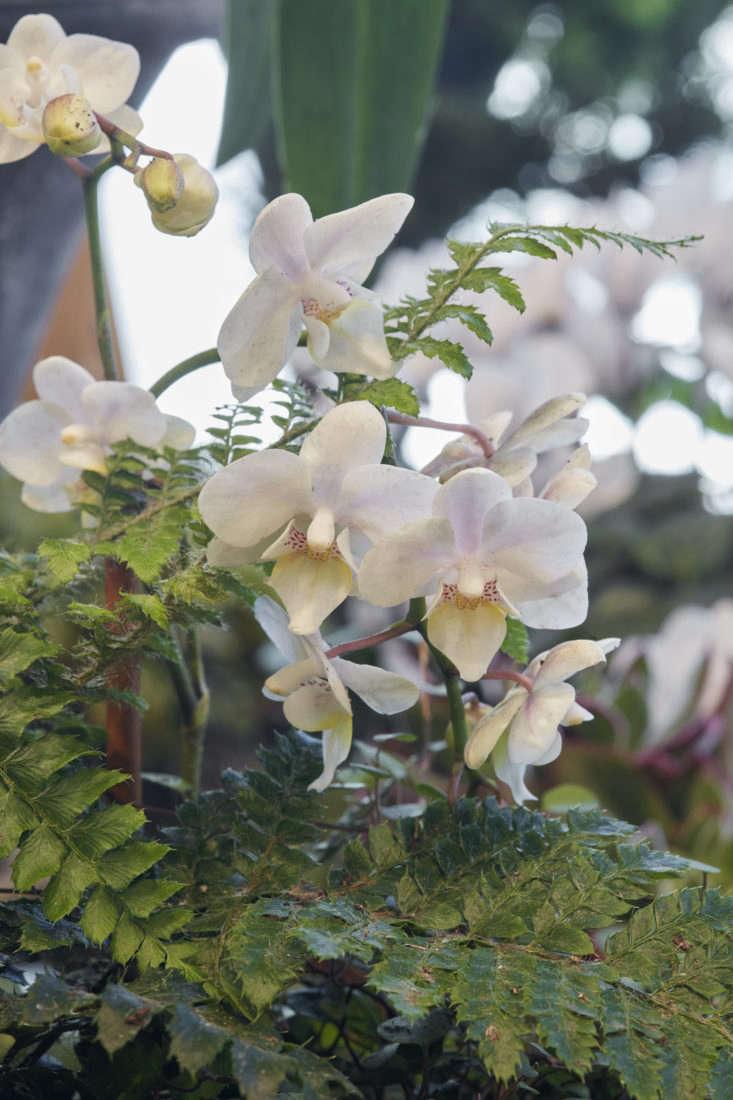 caitlin-atkinson-orchid-terrain1611-069