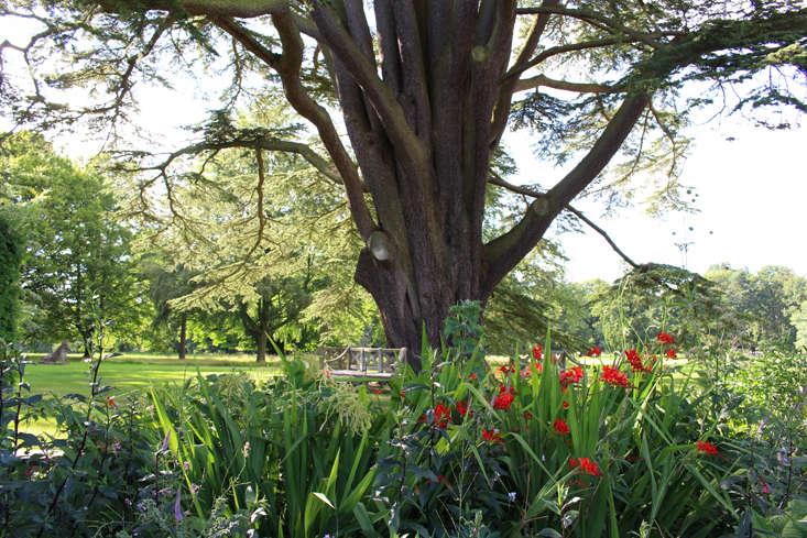 Cedar of Lebanon tree at Cottesbrooke Hall, England