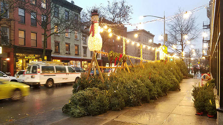 christmas-trees-for-sale-new-york