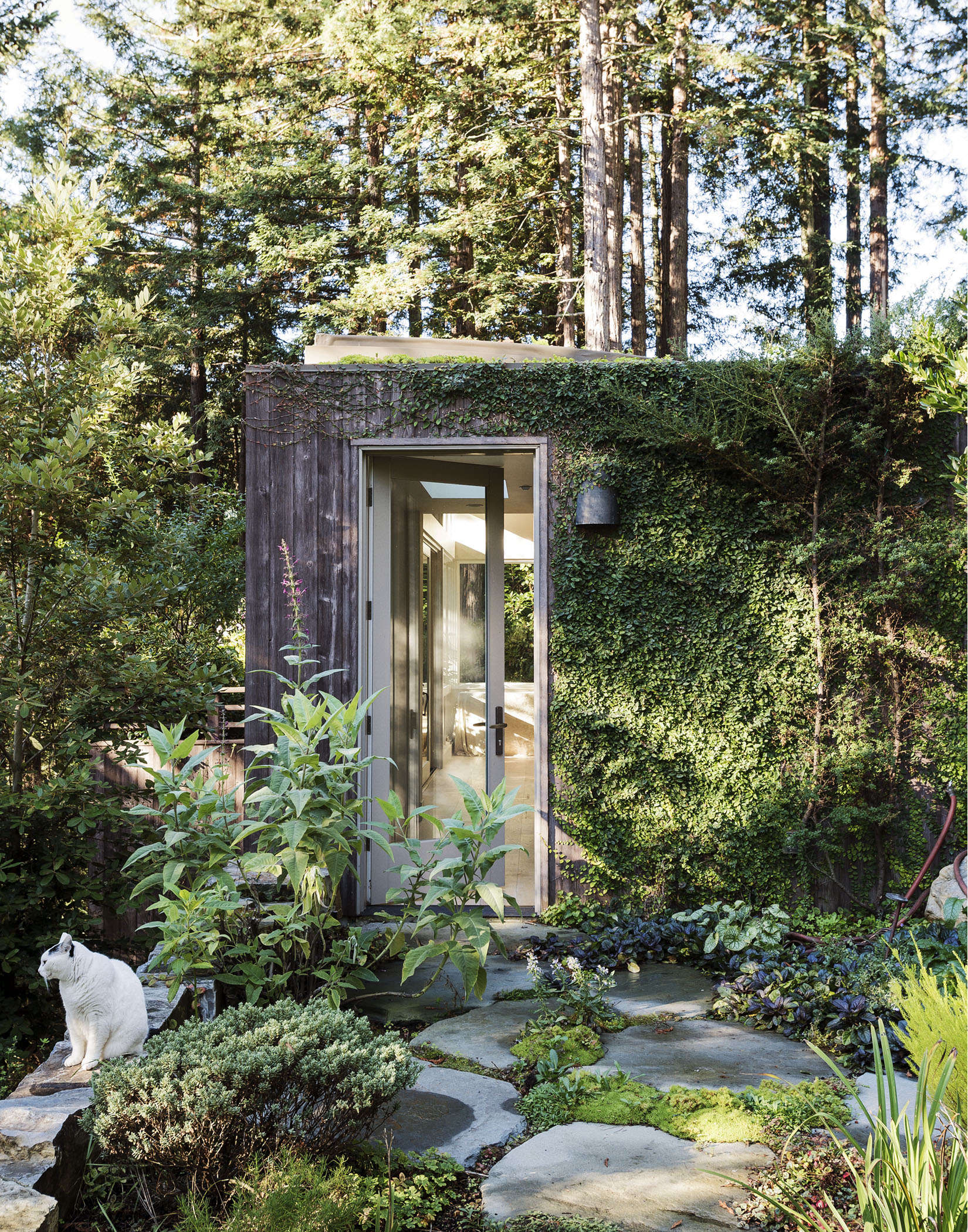 Creeping fig grows on the facade of a backyard yoga studio in Mill Valley, California. Photograph by Matthew Williams. See more of this garden inGardenista: The Definitive Guide to Stylish Outdoor Spaces.