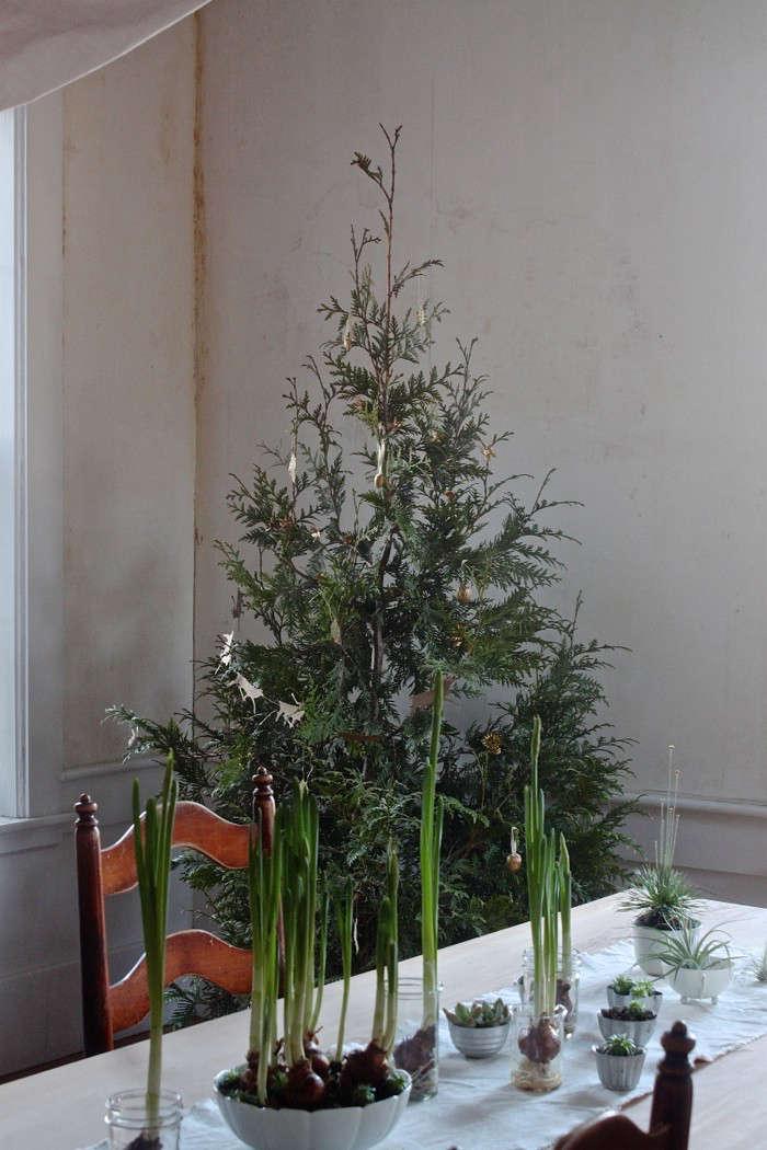 diy-live-christmas-tree-thuja-paperwhites