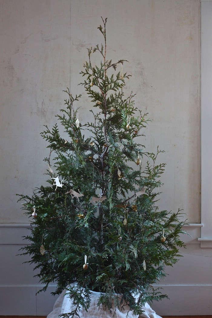 diy-live-christmas-tree-thuja