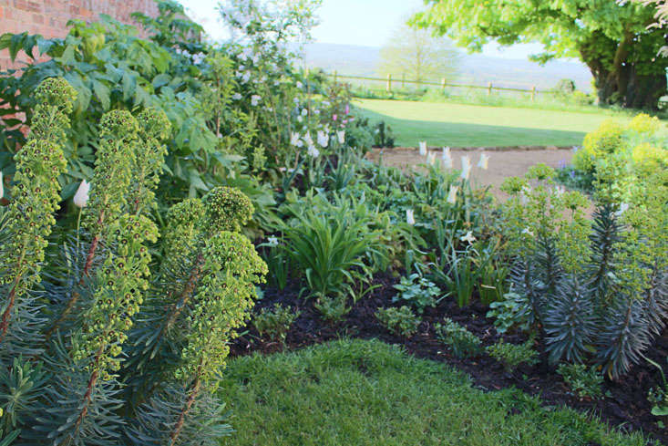 euphorbia-charlotte-fidler-garden-2