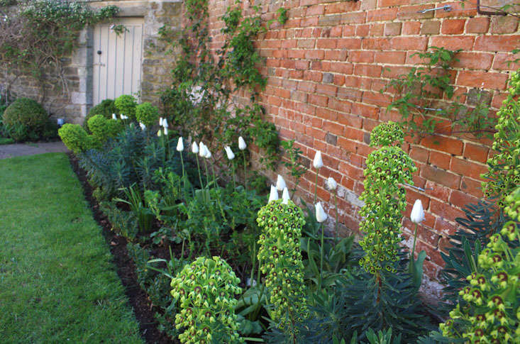euphorbia-charlotte-fidler-garden