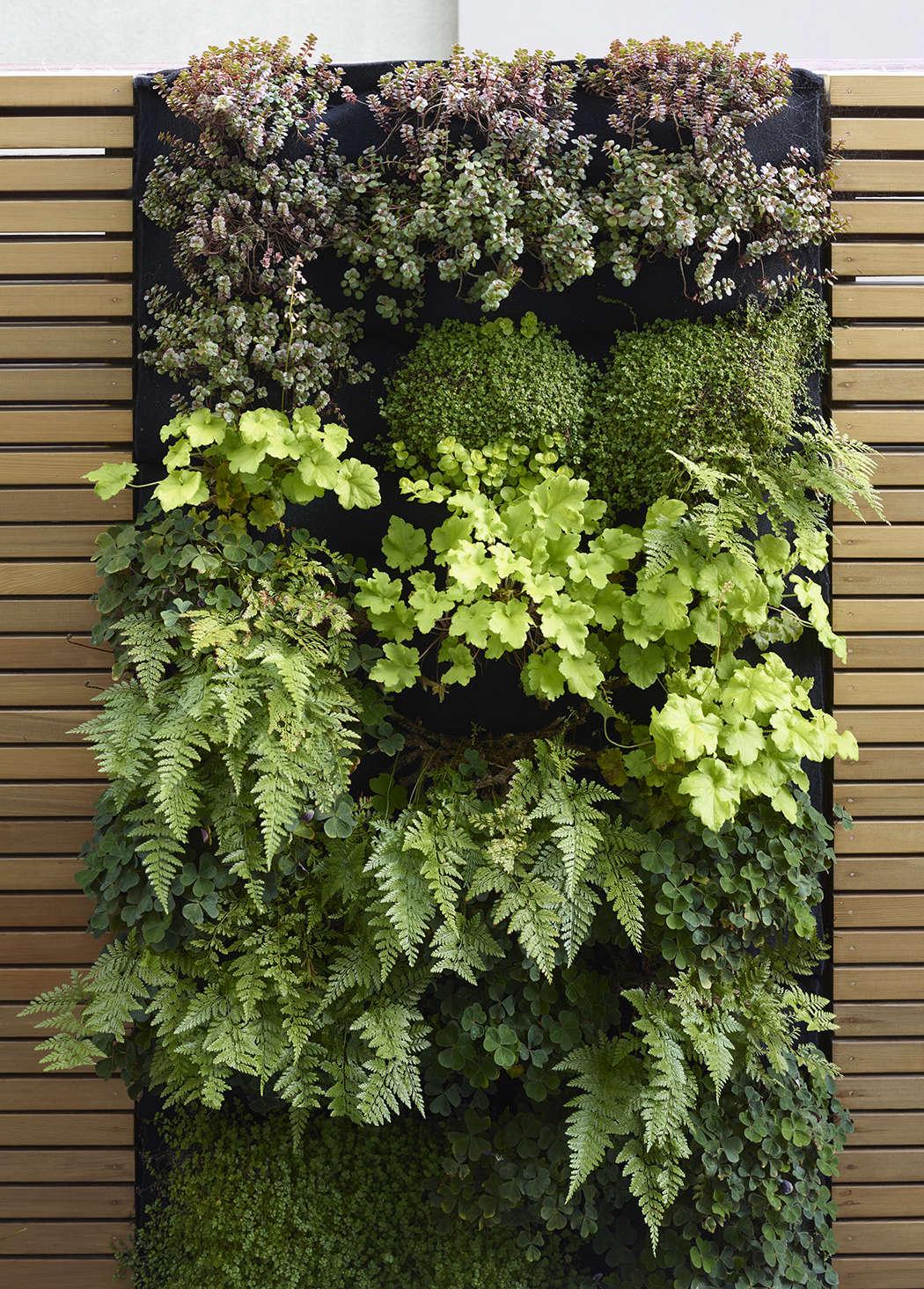A closeup of a green wall designed by Monica Viarengo