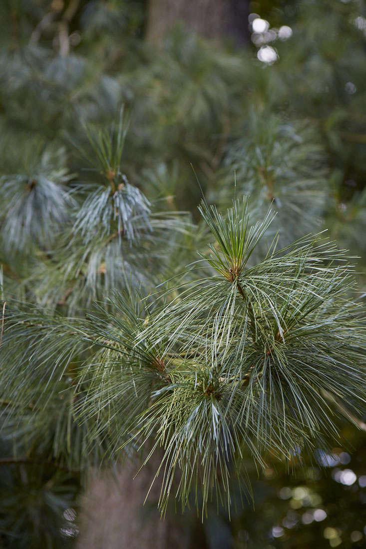 holford-pine-britt-2