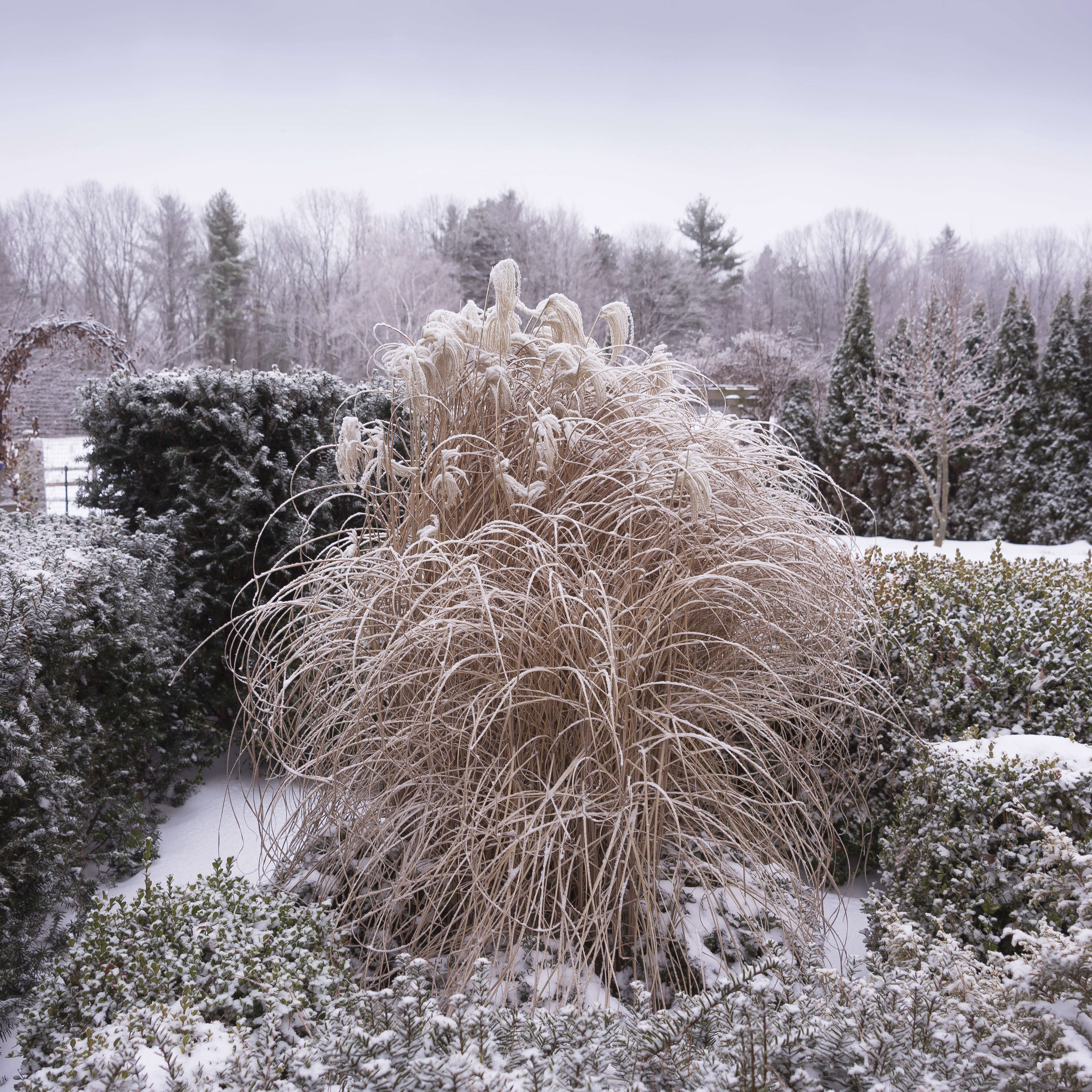 juniper-hill-winter-garden-grasses-joseph-valentine-9