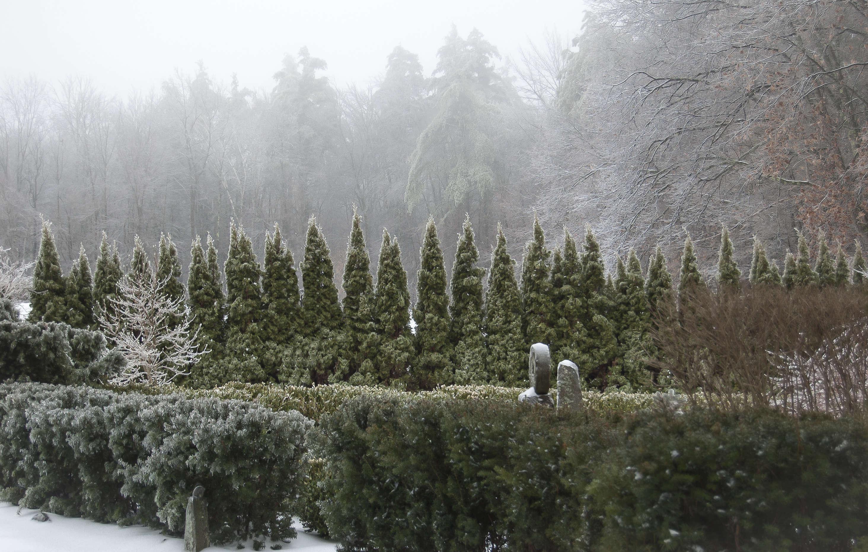 juniper-hill-winter-garden-hedge-joseph-valentine-8