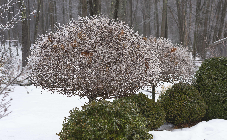 juniper-hill-winter-garden-joseph-valentine-1