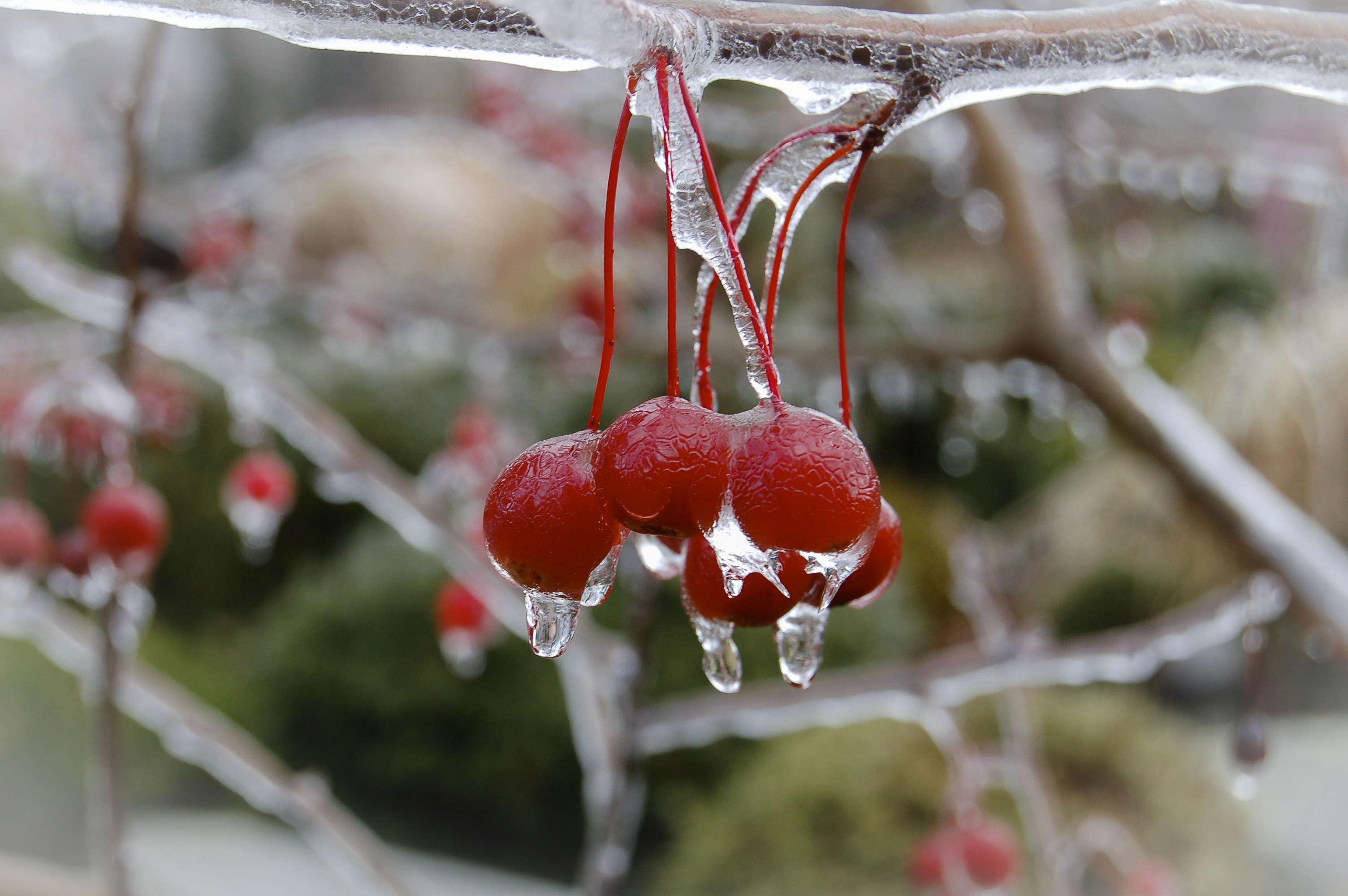 juniper-hill-winter-garden-joseph-valentine-2