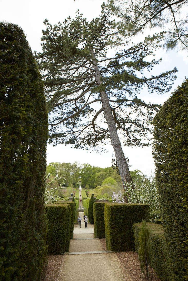 Gardening 101: Pine tree