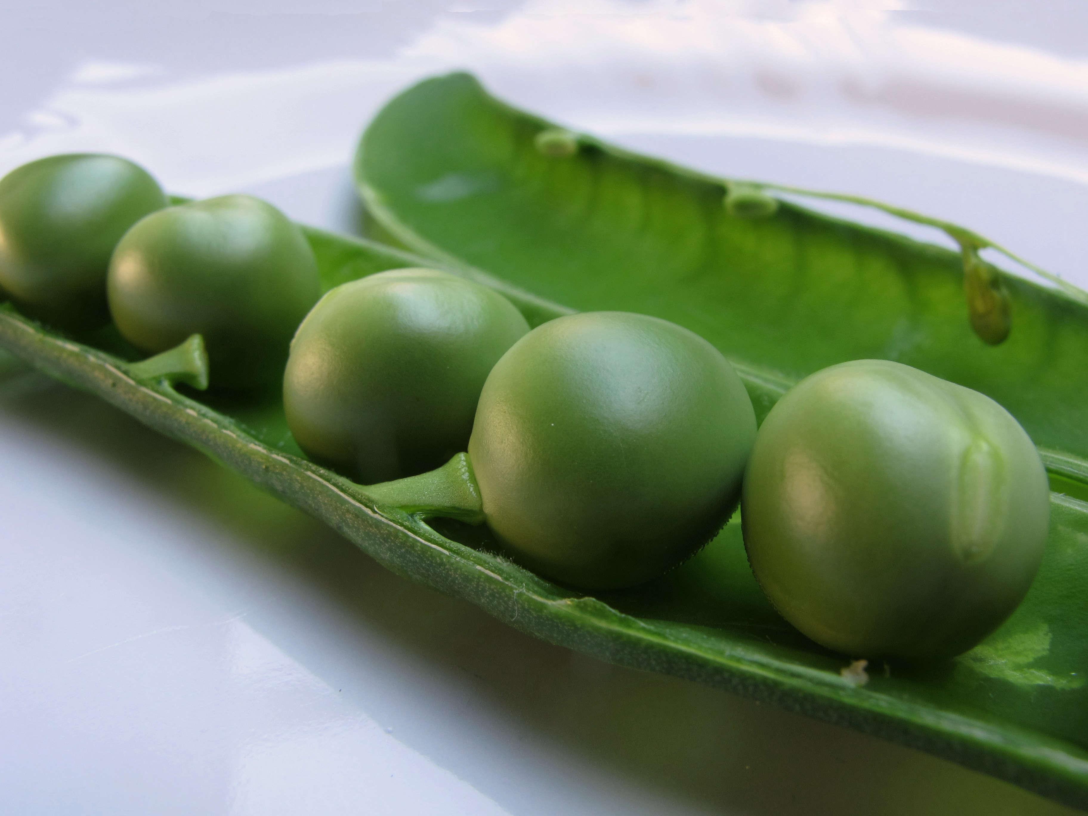 pisum-sativum-peas-pod