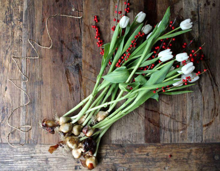 tulips-on-the-bulb-michelle-slatalla-img-3724