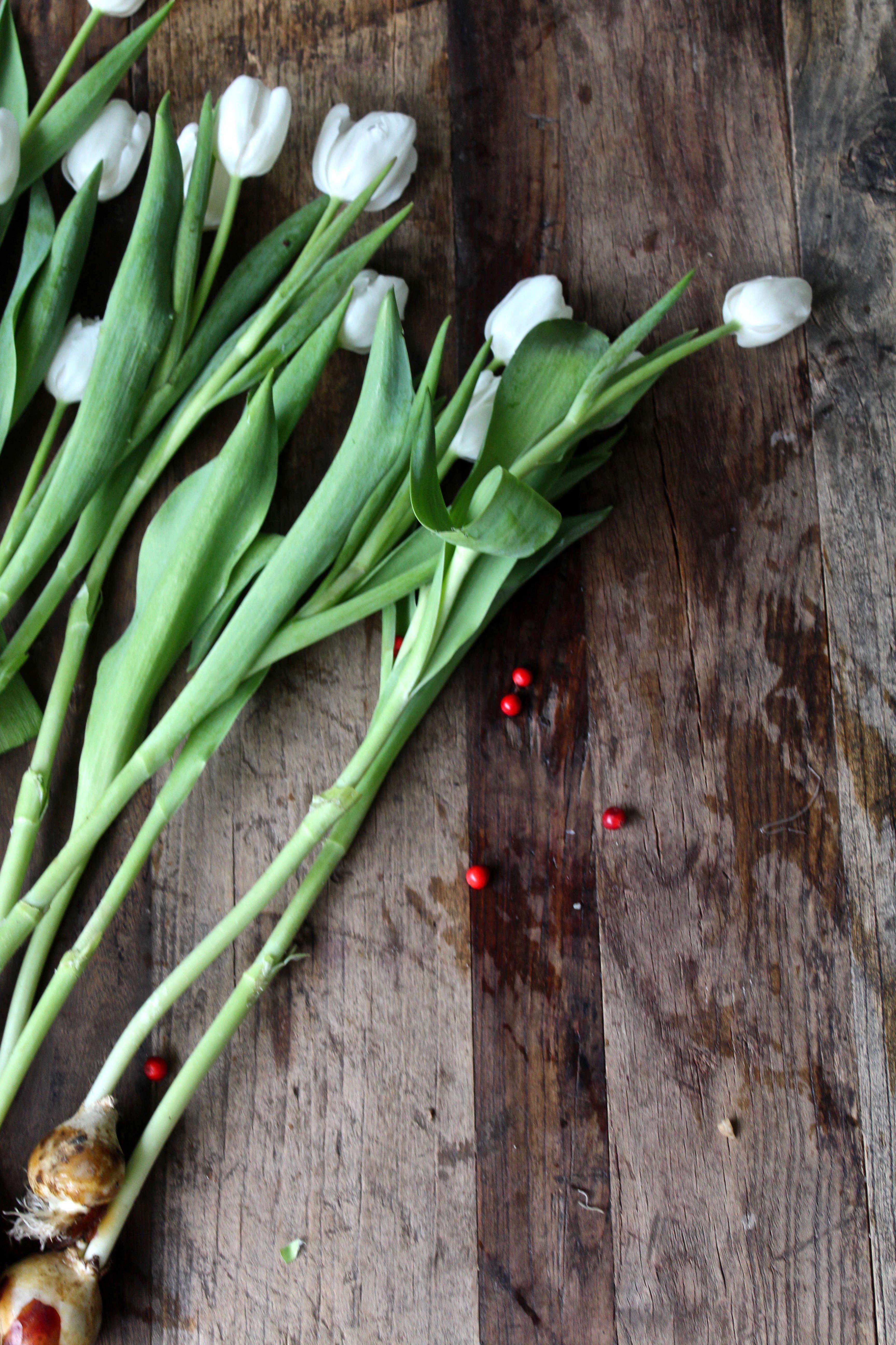 tulips-on-the-bulb-michelle-slatalla-img-3732