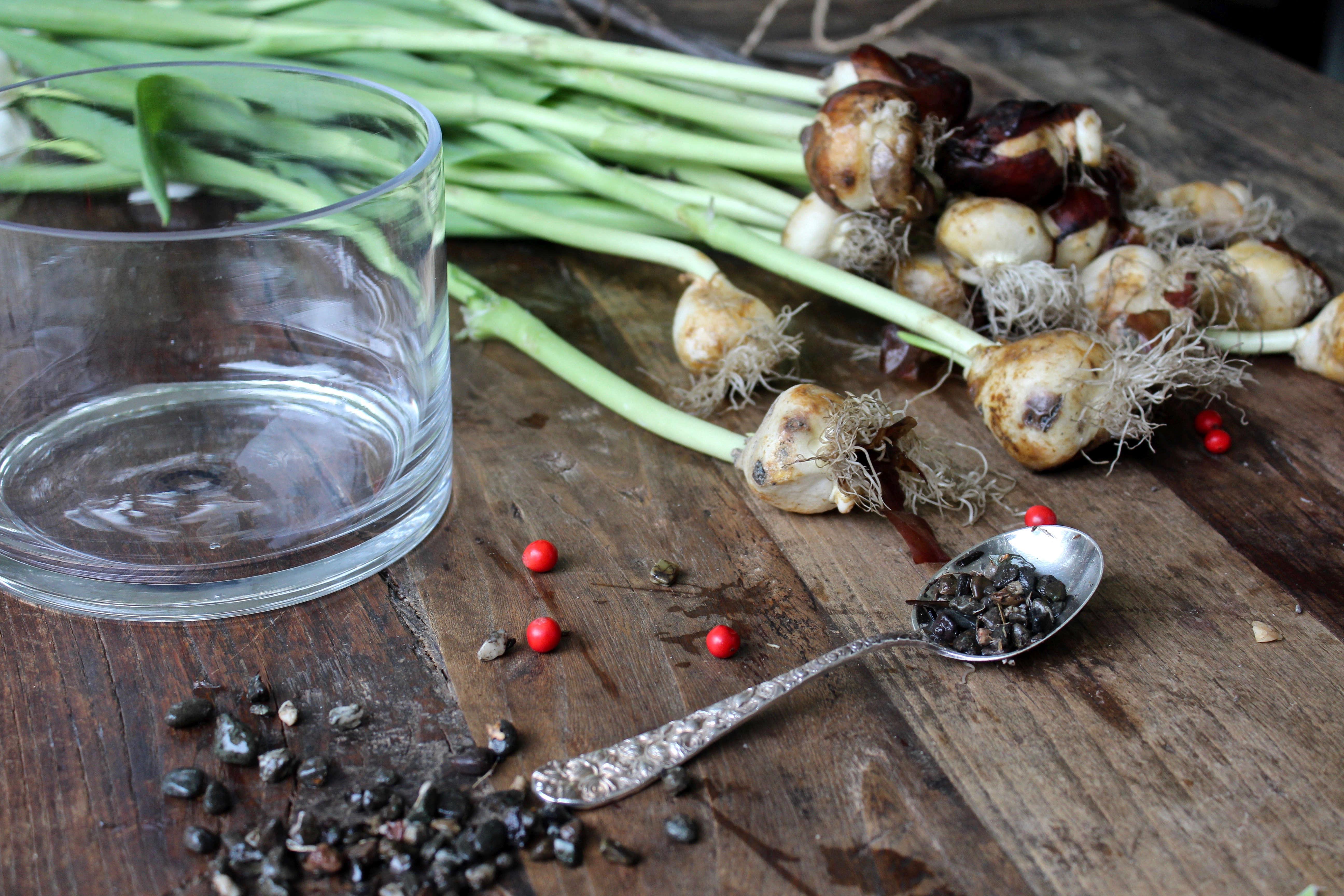 tulips-on-the-bulb-michelle-slatalla-img-3741