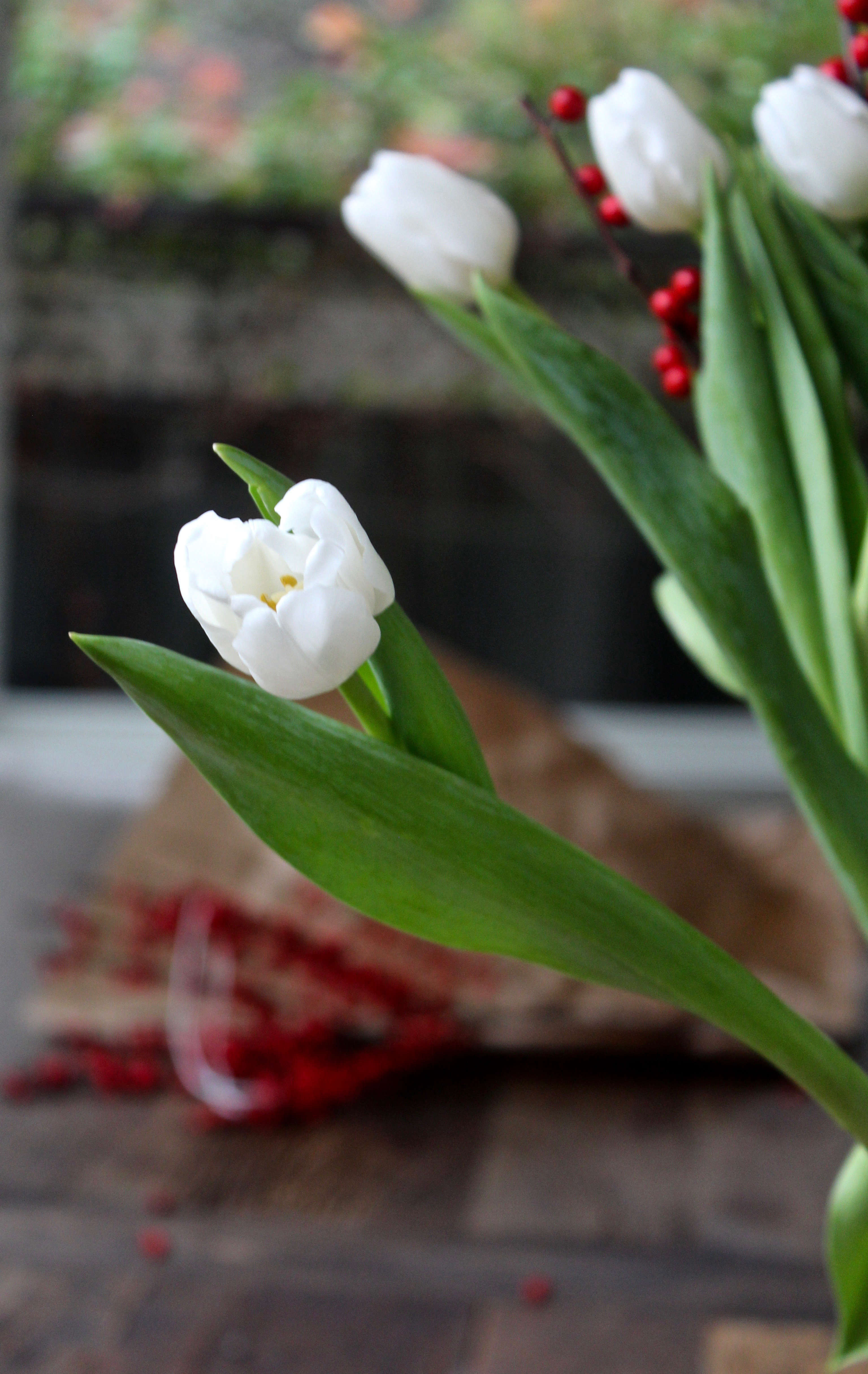 tulips-on-the-bulb-michelle-slatalla-img-3767