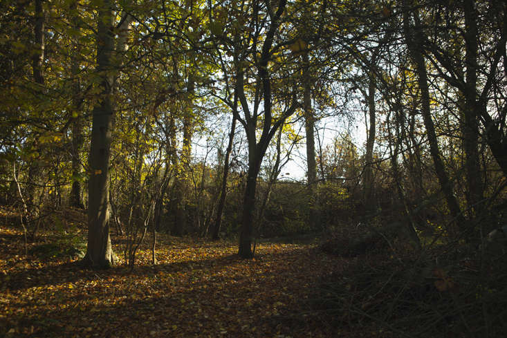 wilderness-trees-9