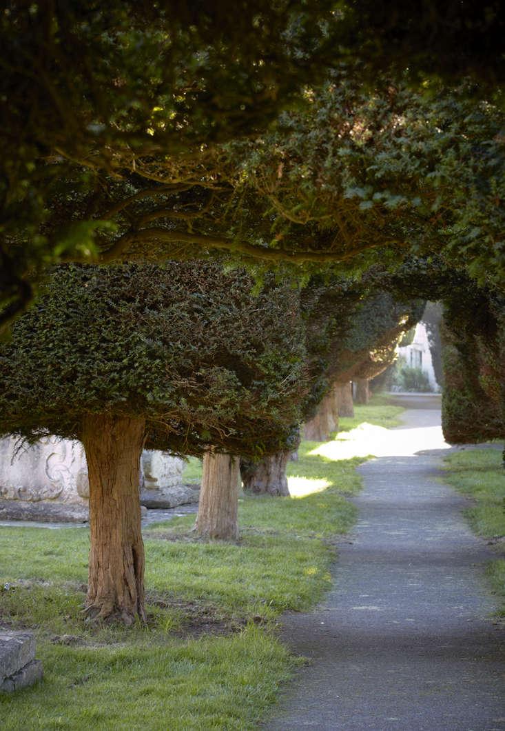 Towering yews; see more at Gardening src=