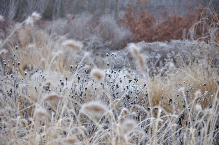 Frost only adds charm to the late-fall garden.Photograph byFrank Heijligersfrom Expert Advice: 9 Tips for a Colorful Winter Garden.