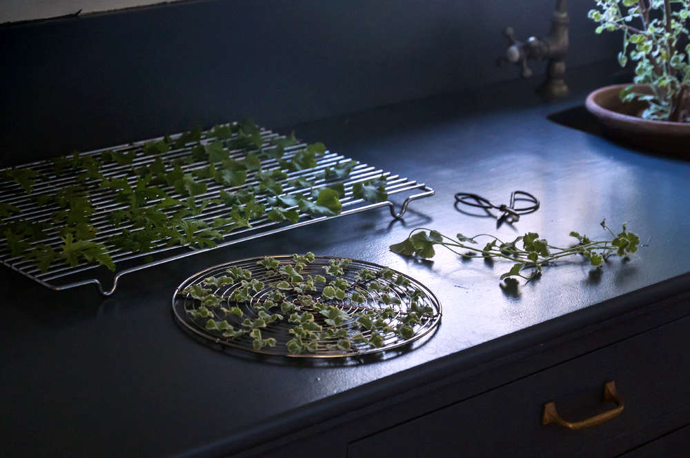 scented geranium leaves how to make sachet tea 4