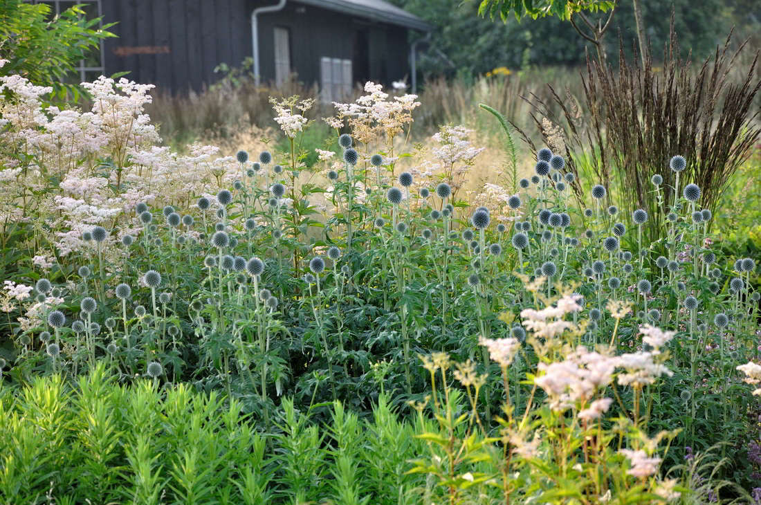 Because plants with good structure tend to bloom later, Frank notes that the successful four-season garden &#8