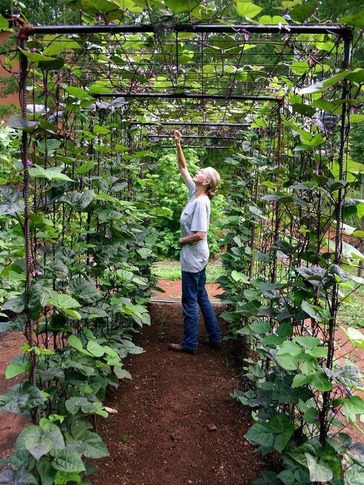 bean-tunnel-diy-vegetable-garden-6-gardenista_0