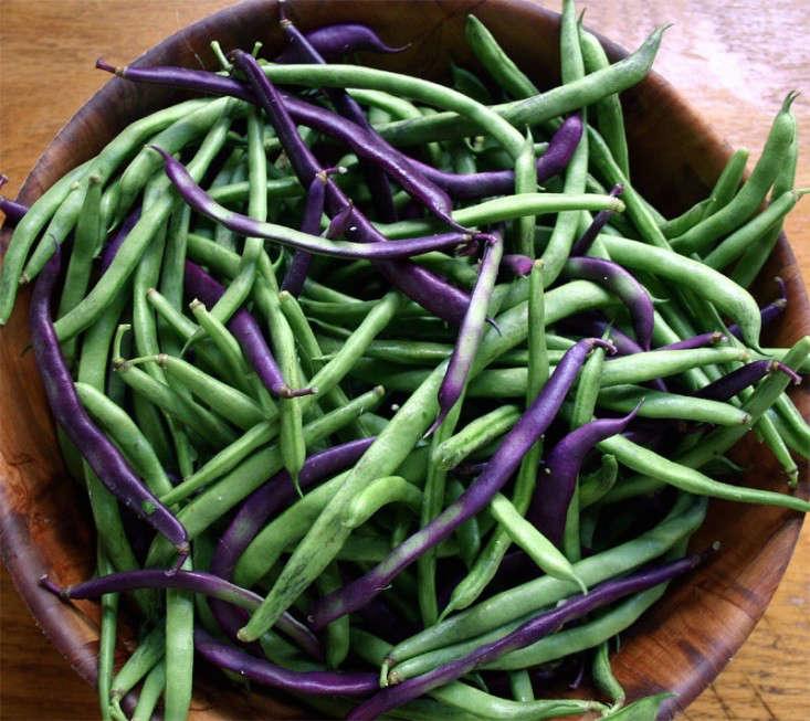 bean-tunnel-diy-vegetable-garden-7-gardenista