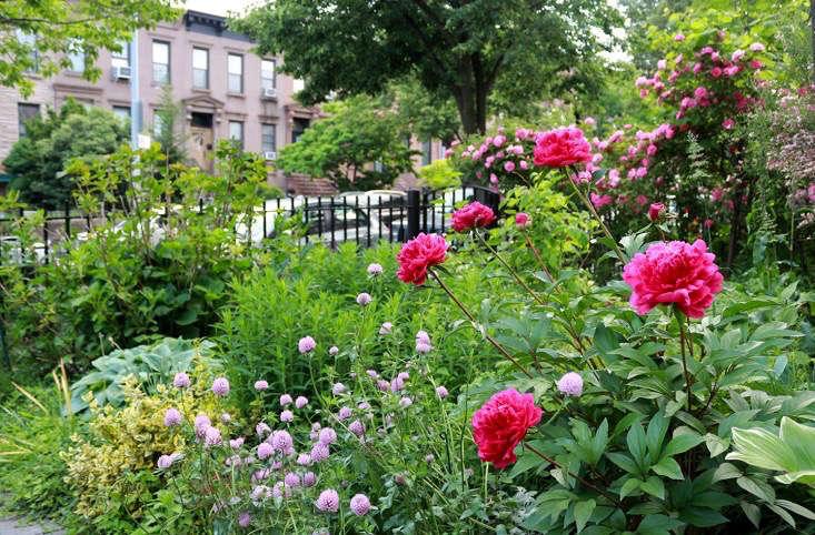 brooklyn-budget-carroll-gardens-peonies-marie-viljoen