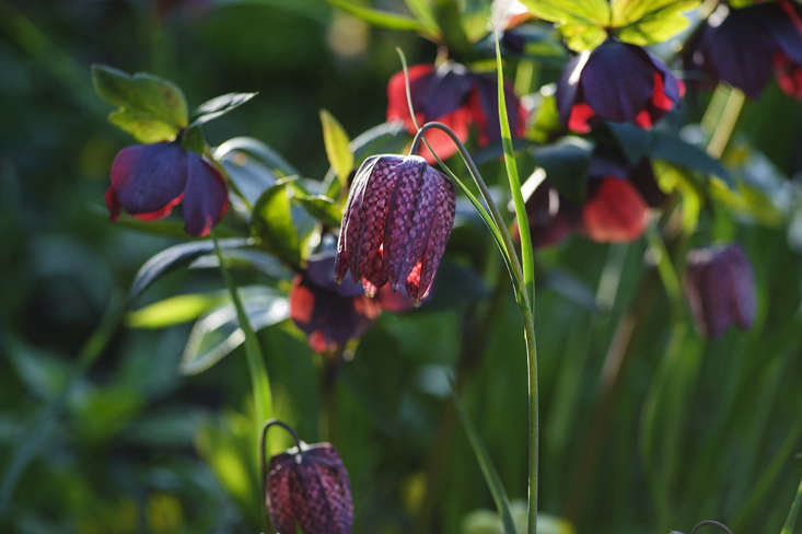 On the internet, &#8\2\20;Claus Dalby&#8\2\17;s Garden Club&#8\2\2\1; will be available to those of us who want more Claus, from \1 March this year. For a monthly subscription, it will be full of his glorious photos, demonstrating design ideas for the garden as well as more detailed work with floral art. He will also be traveling—oh joy—so there will be more opportunities to see him speaking, and his English is good.