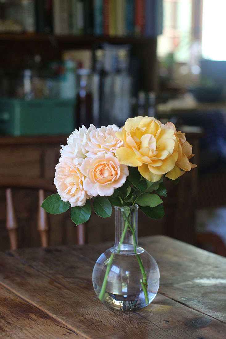 cut-roses-marie-viljoen