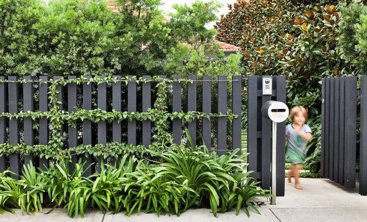 espalier-bouqginvillea-black-fence-anthony-wyer