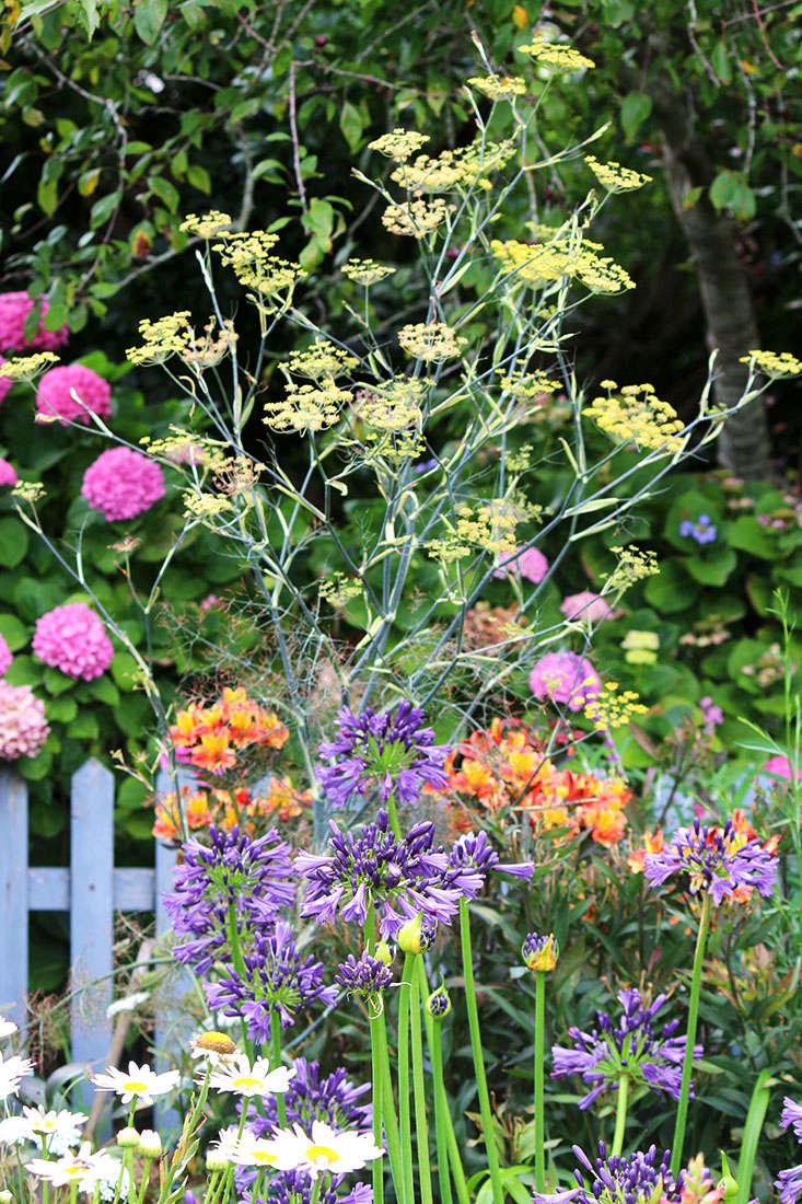 fennel-flowers-marie-viljoen