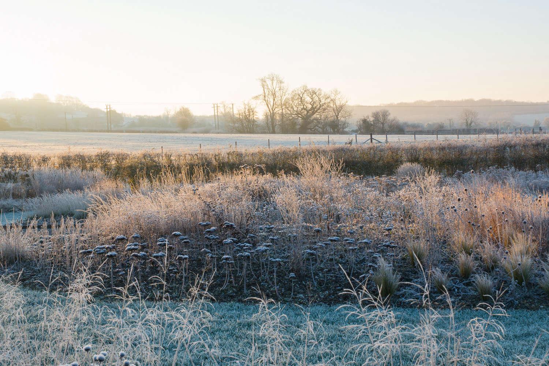 Winter prairie border with Sedum 'Matrona' seed heads in foreground - Oudolf Field, Hauser and Wirth Somerset